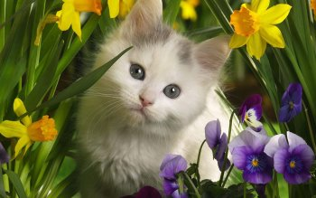 Animal - Cat Wallpapers and Backgrounds ID : 460202
