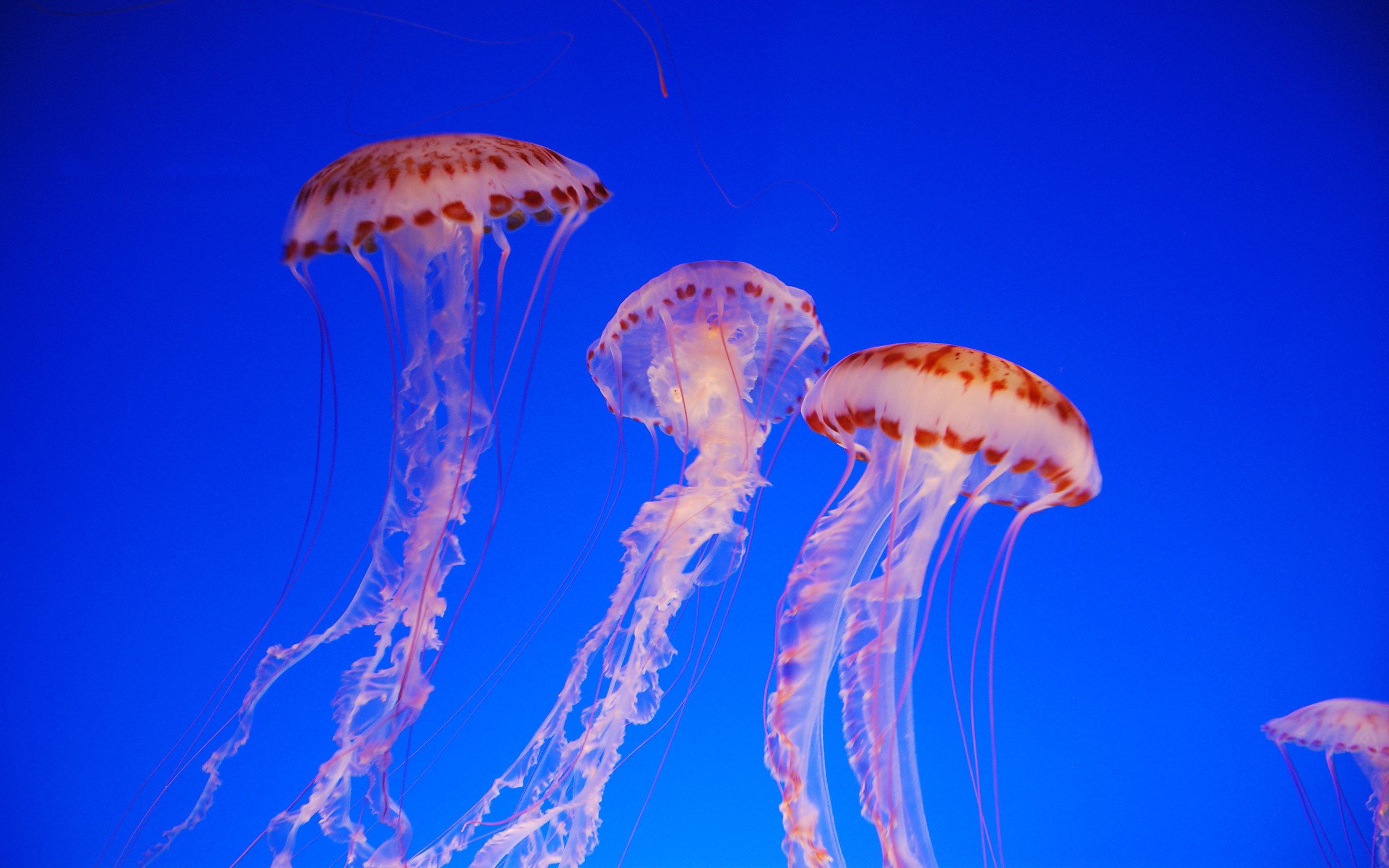 jelly full hd wallpaper and background 2560x1600 id 461179