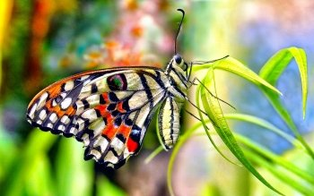Animal - Butterfly Wallpapers and Backgrounds ID : 461089