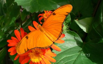 Animal - Butterfly Wallpapers and Backgrounds ID : 462701