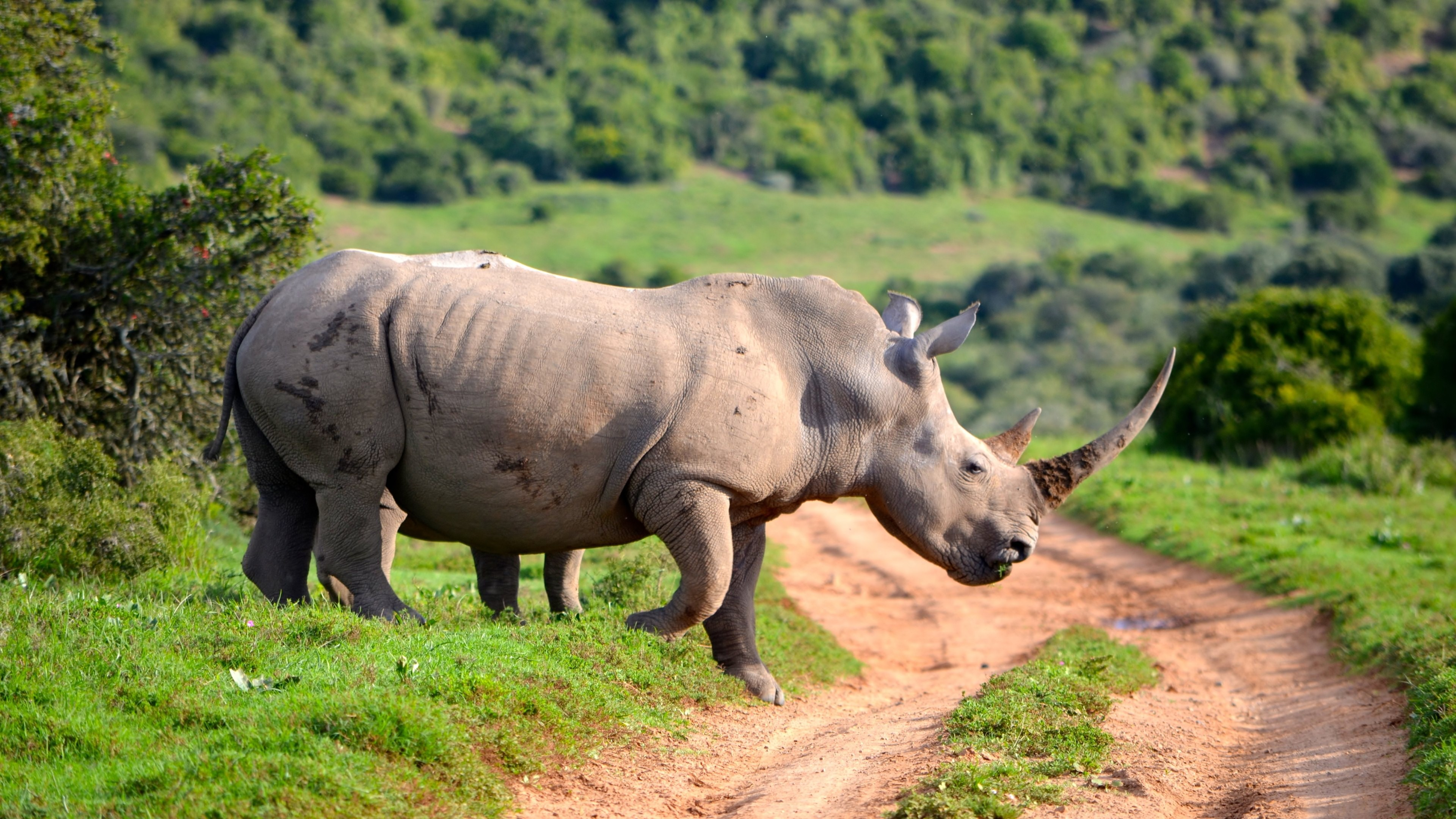 35 rhino hd wallpapers | backgrounds - wallpaper abyss