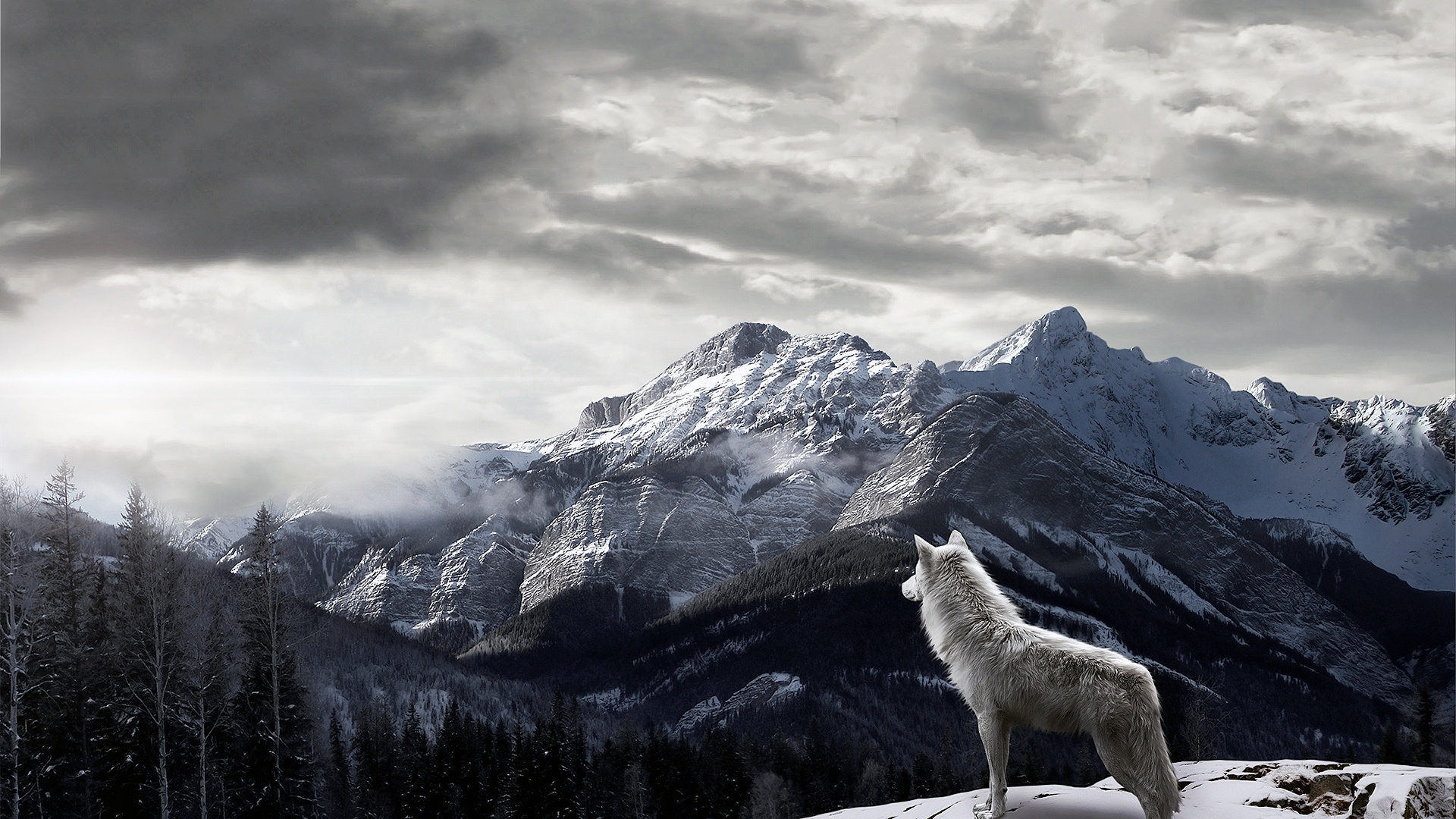 Free Wolf Backgrounds Wallpaper