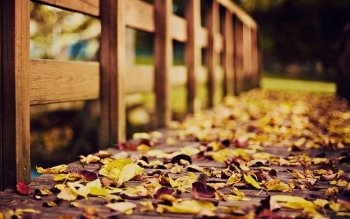 Photography - Autumn Wallpapers and Backgrounds ID : 467723