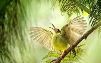 Animal - Bird Wallpapers and Backgrounds ID : 468380