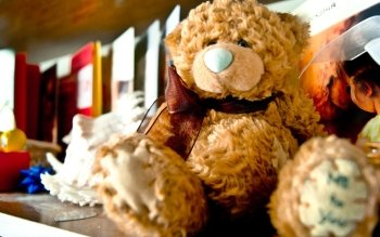 Man Made - Stuffed Animal Wallpapers and Backgrounds ID : 468530