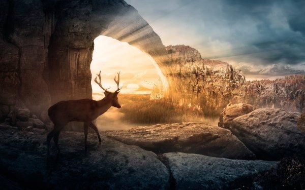 Animal Deer HD Wallpaper | Background Image