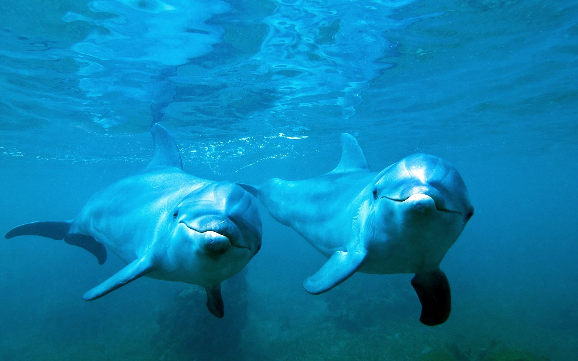 イルカのペア