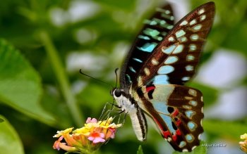 Animal - Butterfly Wallpapers and Backgrounds ID : 472718