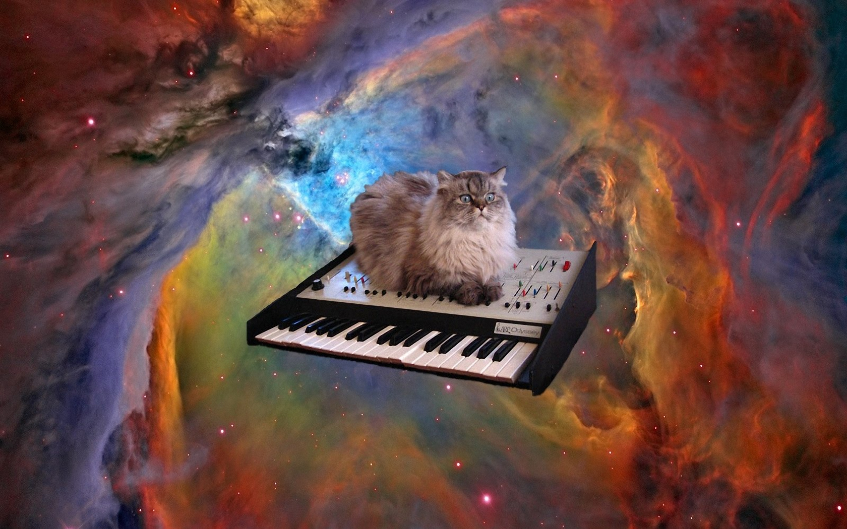 Cat In Space Wallpaper And Background Image