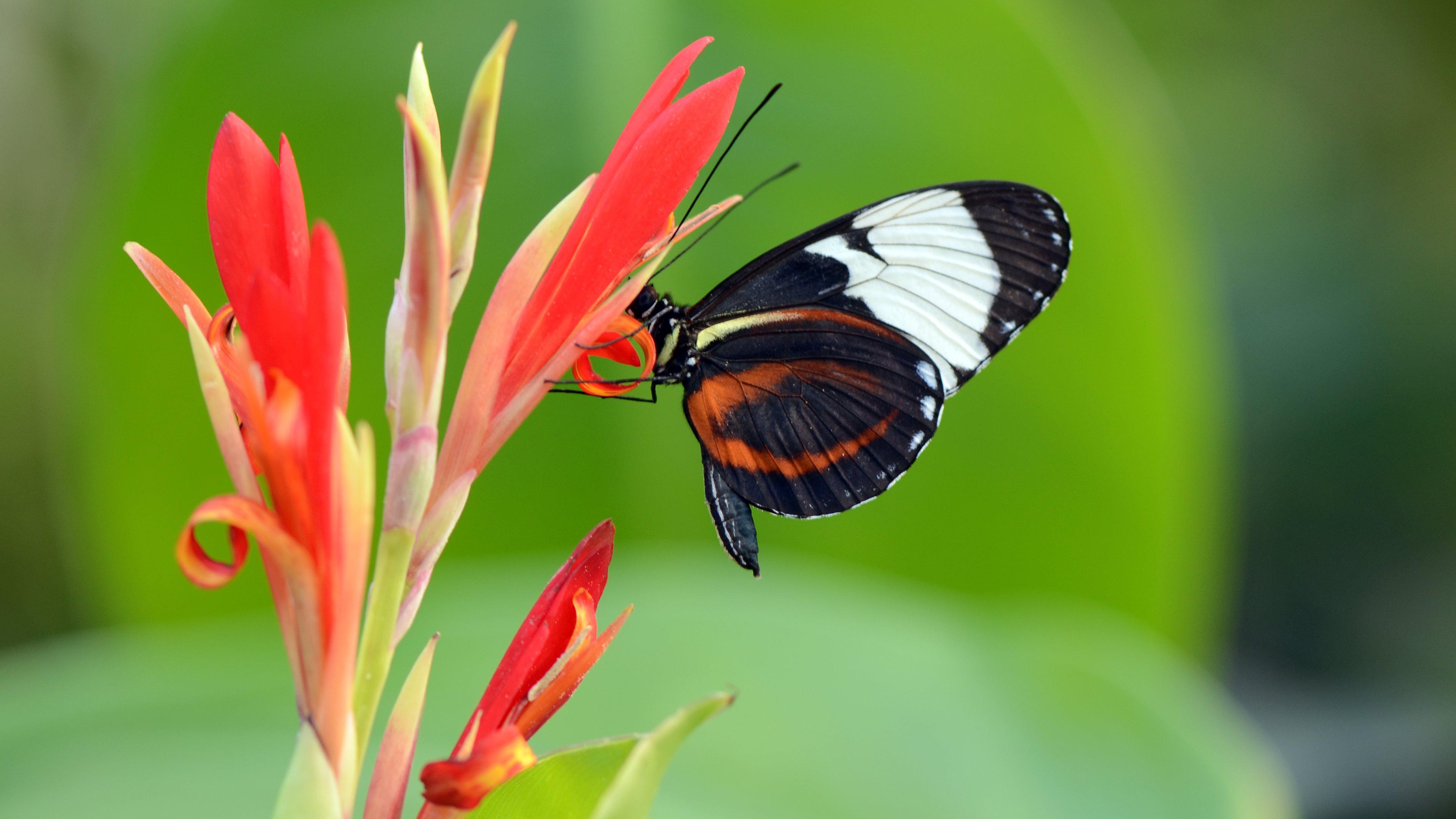 butterflies 4k Ultra HD Wallpaper and Background Image ...