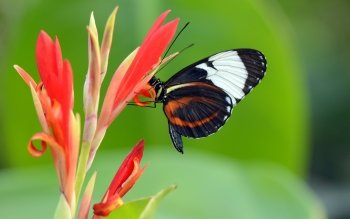Animal - Butterfly Wallpapers and Backgrounds ID : 476247