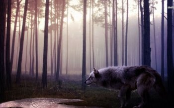 Animal - Wolf Wallpapers and Backgrounds ID : 479949