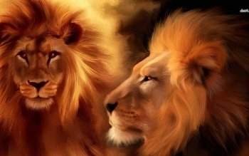 Animal - Lion Wallpapers and Backgrounds ID : 481910