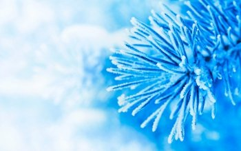 Photography - Winter Wallpapers and Backgrounds ID : 482537