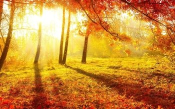 Tierra - Otoño Wallpapers and Backgrounds ID : 485700