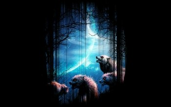 Djur - Wolf Wallpapers and Backgrounds ID : 486398