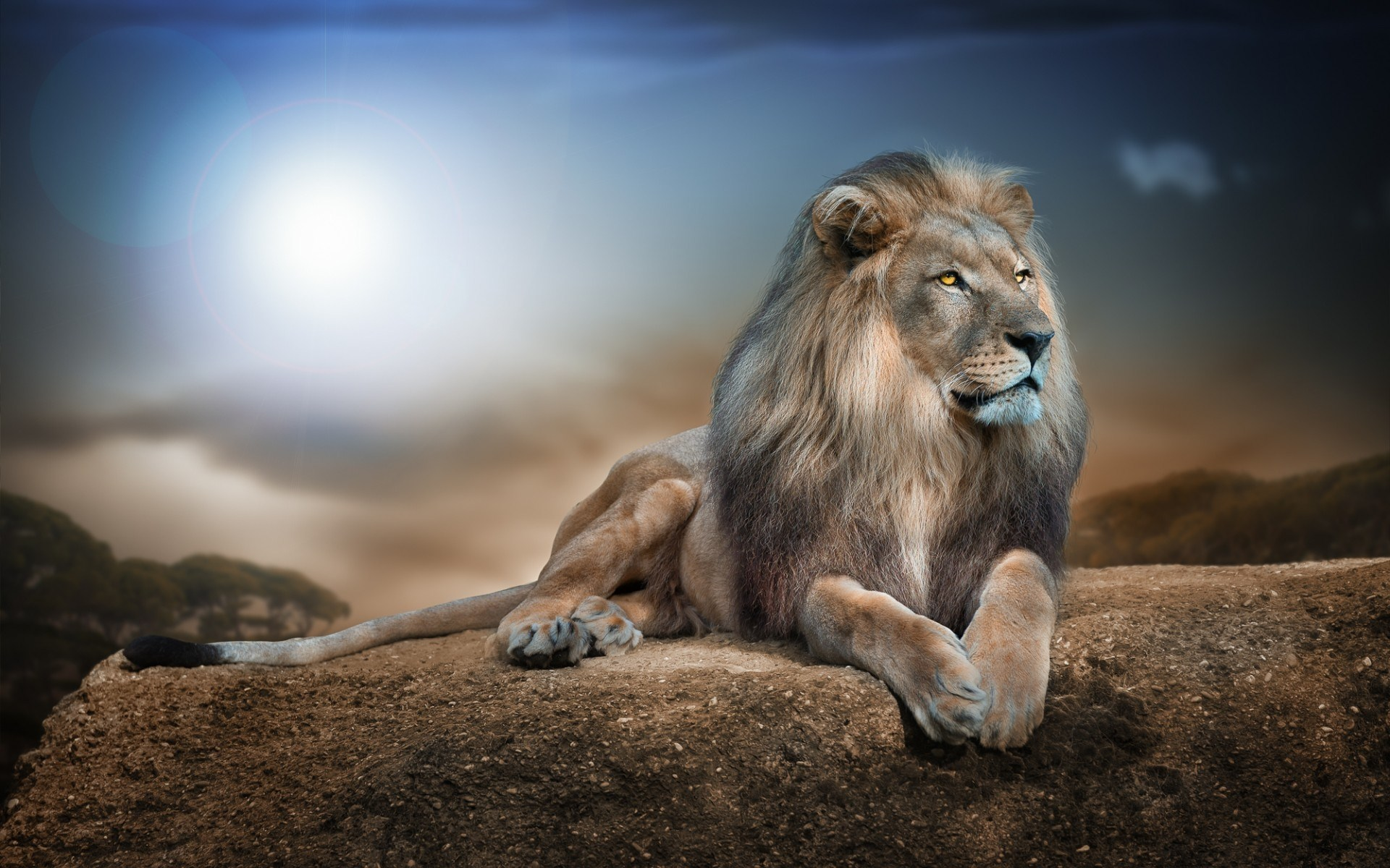 Lion Hd Wallpaper Background Image 1920x1200 Id 487131