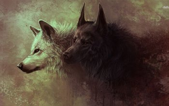 Djur - Wolf Wallpapers and Backgrounds ID : 487786