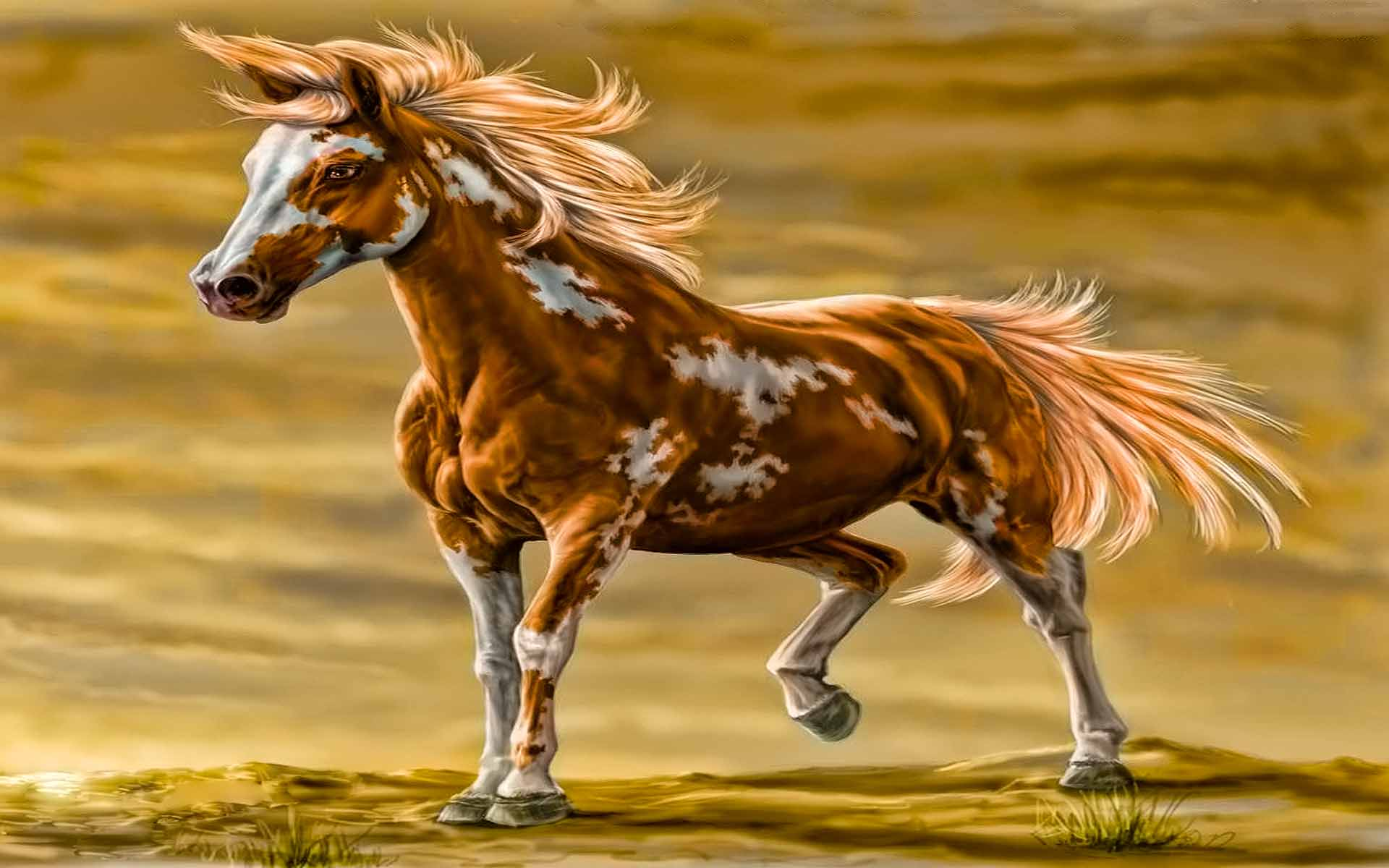 Horse Hd Wallpaper Background Image 1920x1200 Id 490232