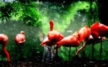 Animal - Flamingo Wallpapers and Backgrounds ID : 491933
