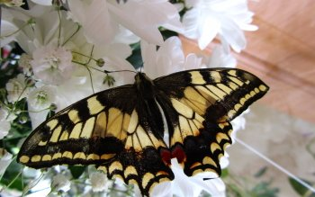 Animal - Butterfly Wallpapers and Backgrounds ID : 492236
