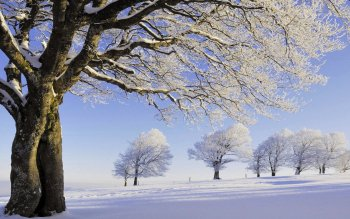 Earth - Winter Wallpapers and Backgrounds ID : 498978
