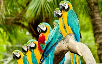 Animal - Macaw Wallpapers and Backgrounds ID : 501215