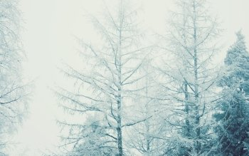 Jorden - Winter Wallpapers and Backgrounds ID : 501298