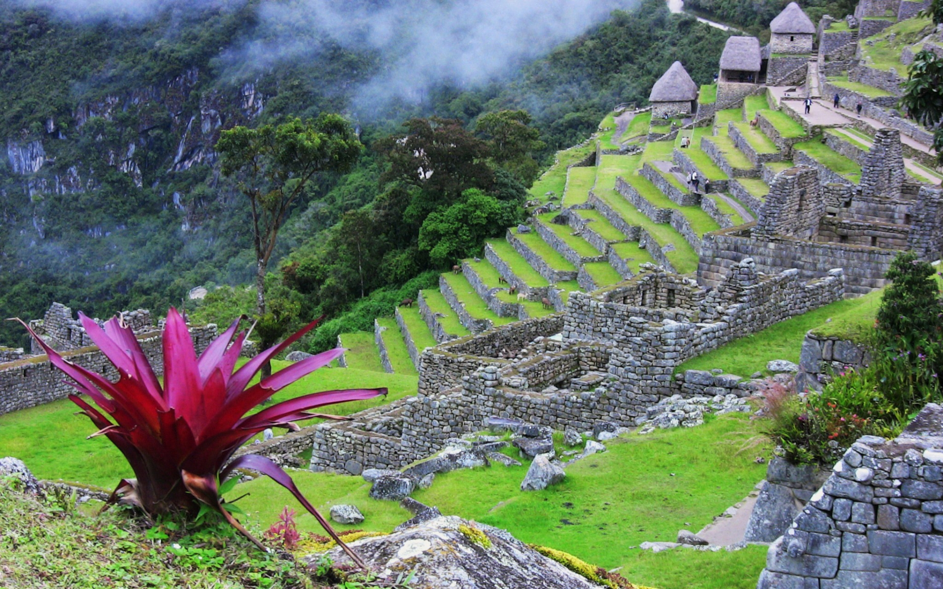 Machu Picchu Full Hd Wallpaper And Background 1920x1200 Id 503850