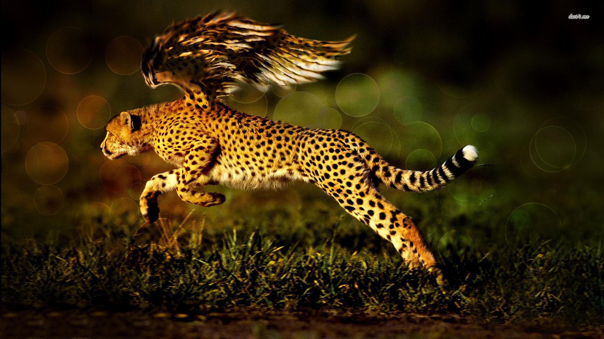 3 cheetah hd wallpapers backgrounds wallpaper abyss