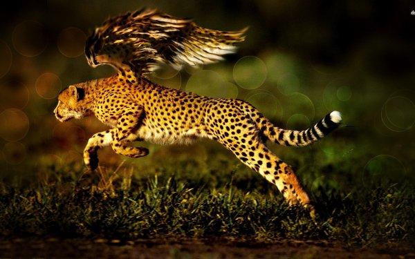Fantaisie Cheetah Animaux Fantastique Fond d'écran HD | Arrière-Plan