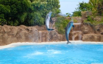 Animal - Dolphin Wallpapers and Backgrounds ID : 505273