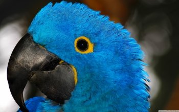 Animal - Parrot Wallpapers and Backgrounds ID : 506402