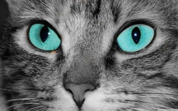 Animal - Cat Wallpapers and Backgrounds ID : 508242