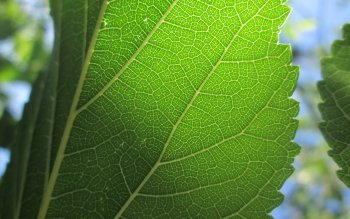 Earth - Leaf Wallpapers and Backgrounds ID : 514305