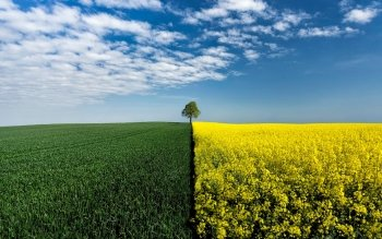 Earth - Field Wallpapers and Backgrounds ID : 516681
