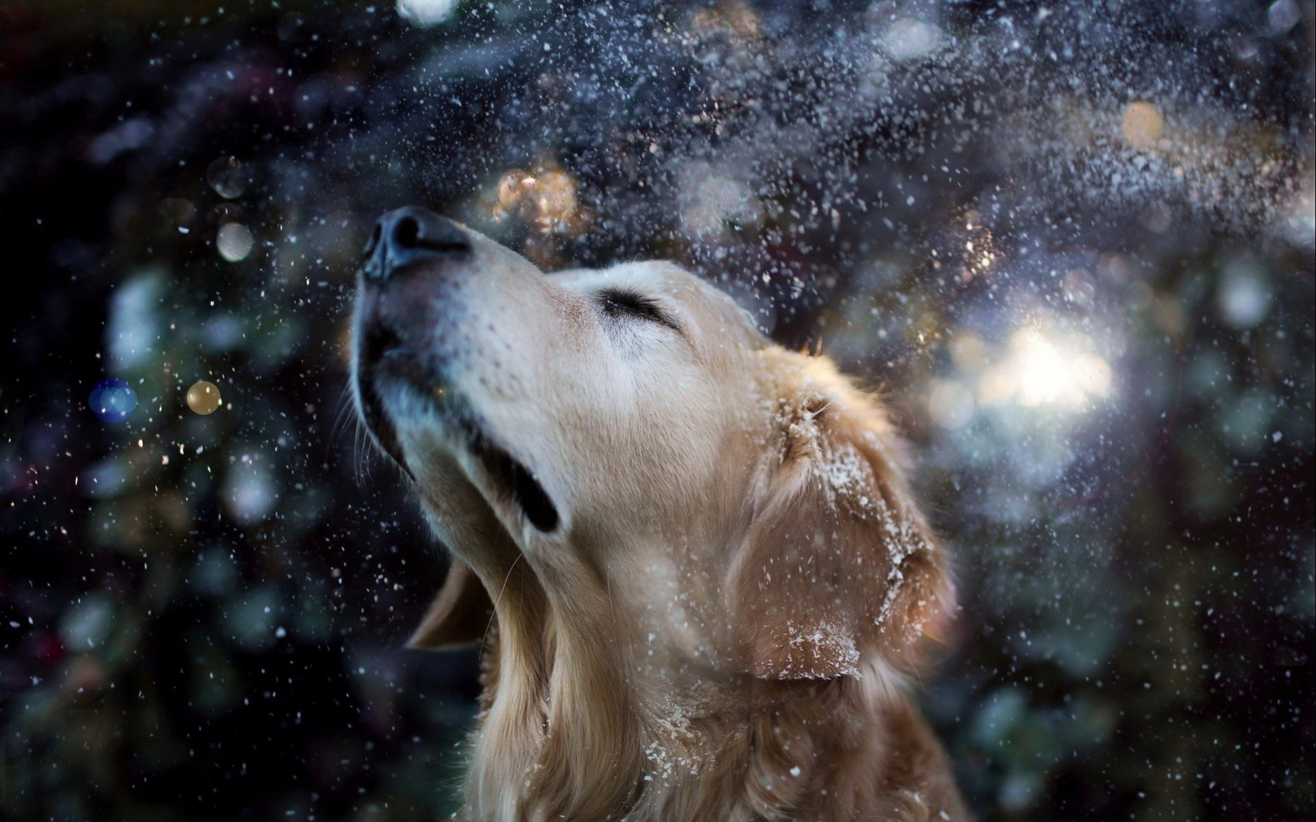 354 golden retriever hd wallpapers | background images - wallpaper abyss