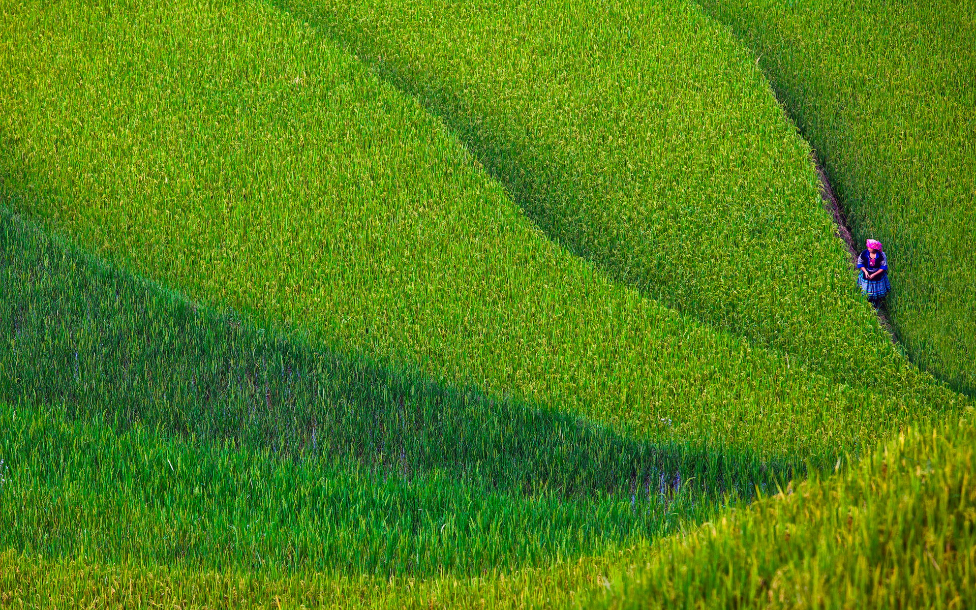 Rice terrace full hd wallpaper and background 1920x1200 for Meaning of terrace in english