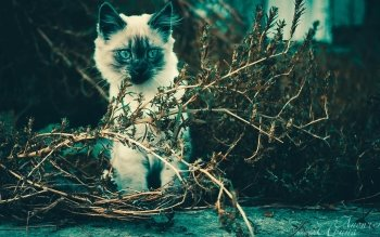 Animal - Cat Wallpapers and Backgrounds ID : 524541