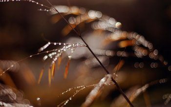 Photography - Macro Wallpapers and Backgrounds ID : 524929