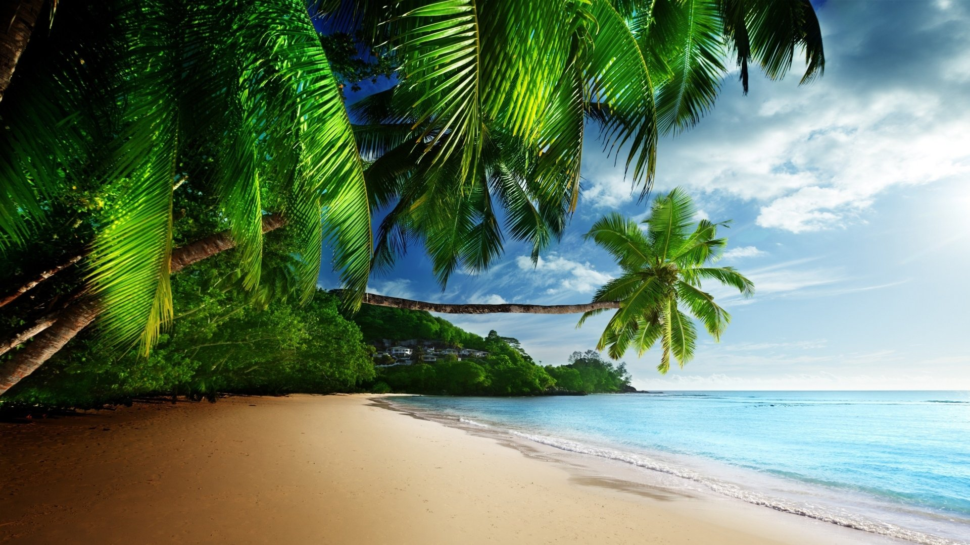Earth - Tropical  Palm Tree Seashore Earth Beach Ocean Sea Wallpaper