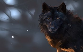 Animal - Wolf Wallpapers and Backgrounds ID : 528054