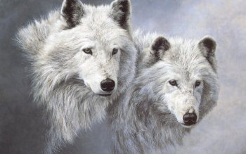 Animal - Wolf Wallpapers and Backgrounds ID : 529553