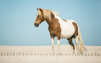 Animal - Horse Wallpapers and Backgrounds ID : 534640