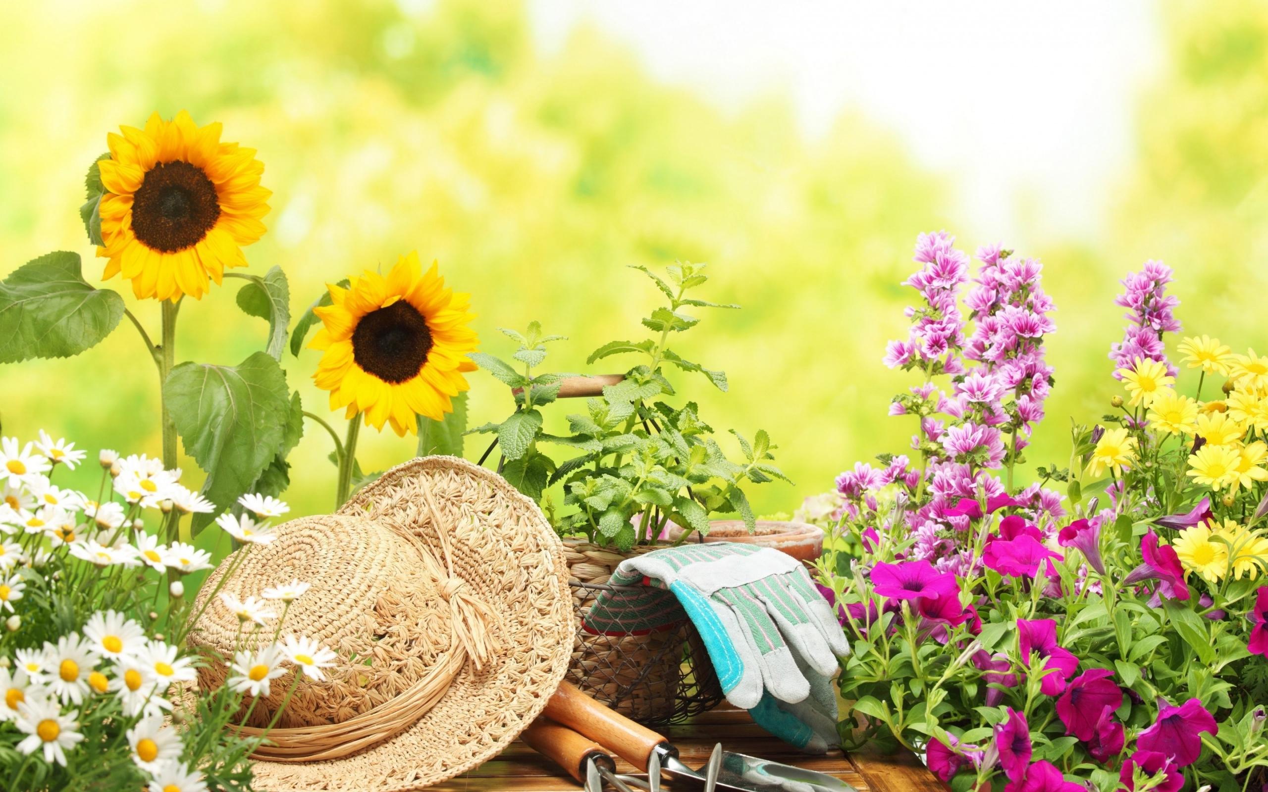 Garden Hd Wallpaper Background Image 2560x1600