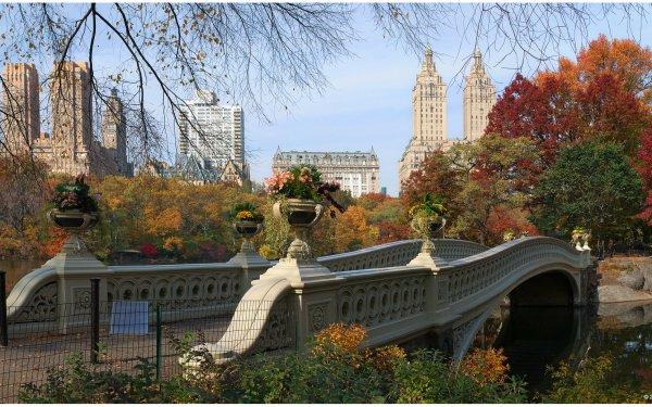 Man Made Bridge Bridges New York Fall Bow Bridge Manhattan Central Park HD Wallpaper | Background Image