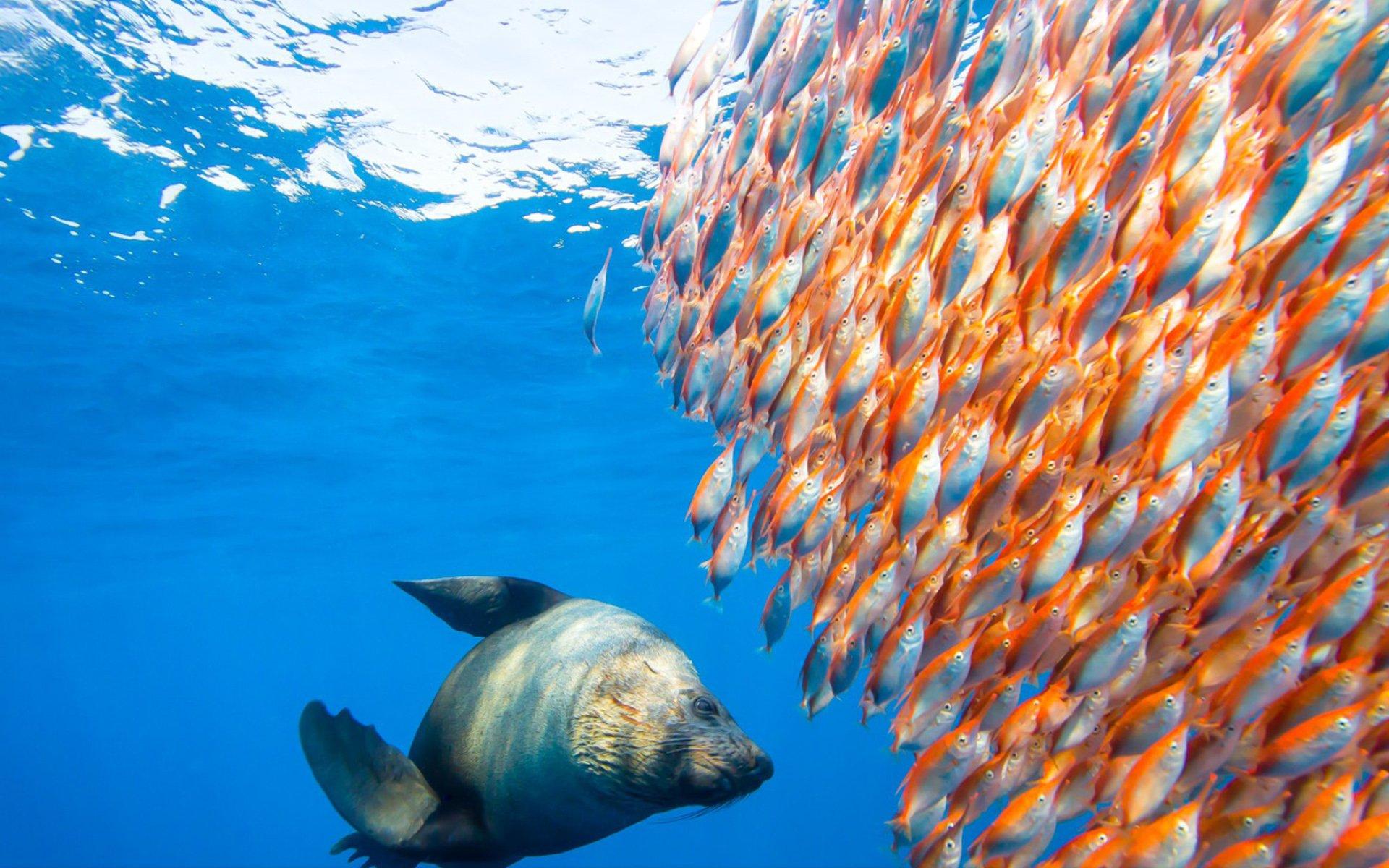 fish marlin desktop 1920x1200 - photo #40