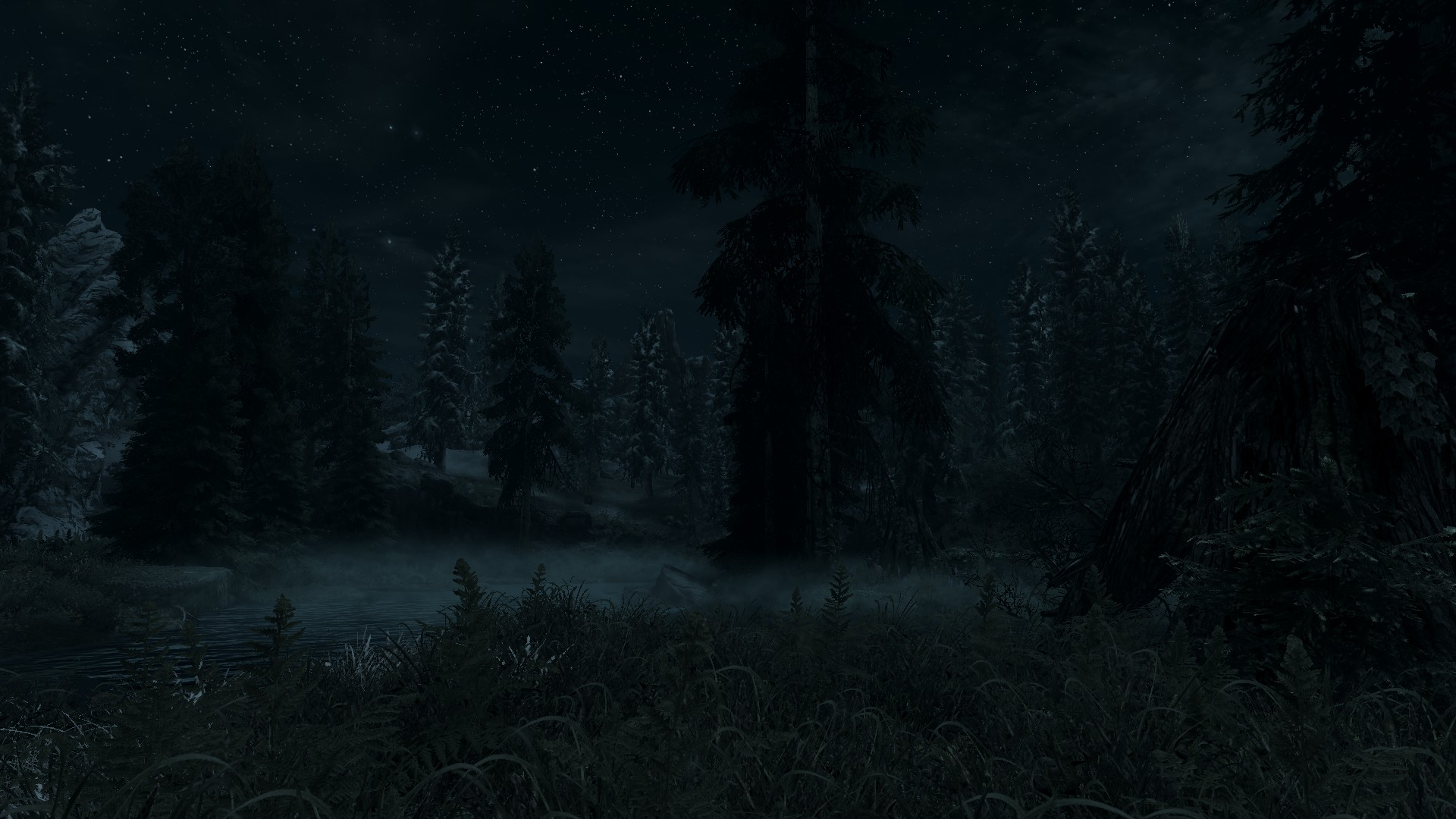 Dark Forest Full HD Wallpaper And Background Image