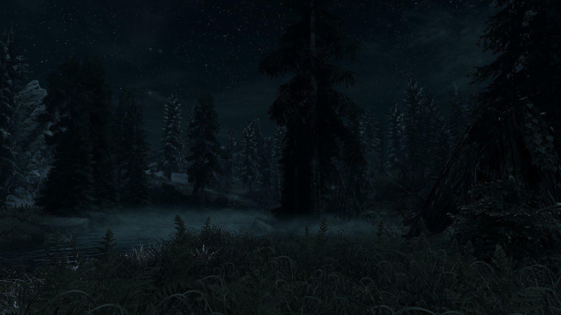 dark forest hd wallpaper background image 1920x1080