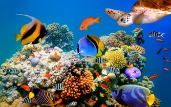 13 Coral Reef HD Wallpapers